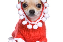 Keeping Your Pet Safe and Healthy This Winter