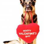 Valentine's Day Ideas for Your Pets