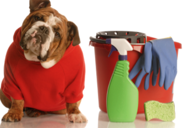 Spring Cleaning for Pet Owners