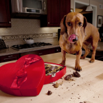 10 Foods to Keep Away From Your Dog