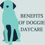 Benefits of Doggie Day Care