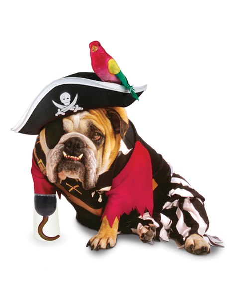 Top Halloween Costumes For Your Dog
