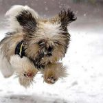 Keeping Your Dog Healthy in the Winter Months