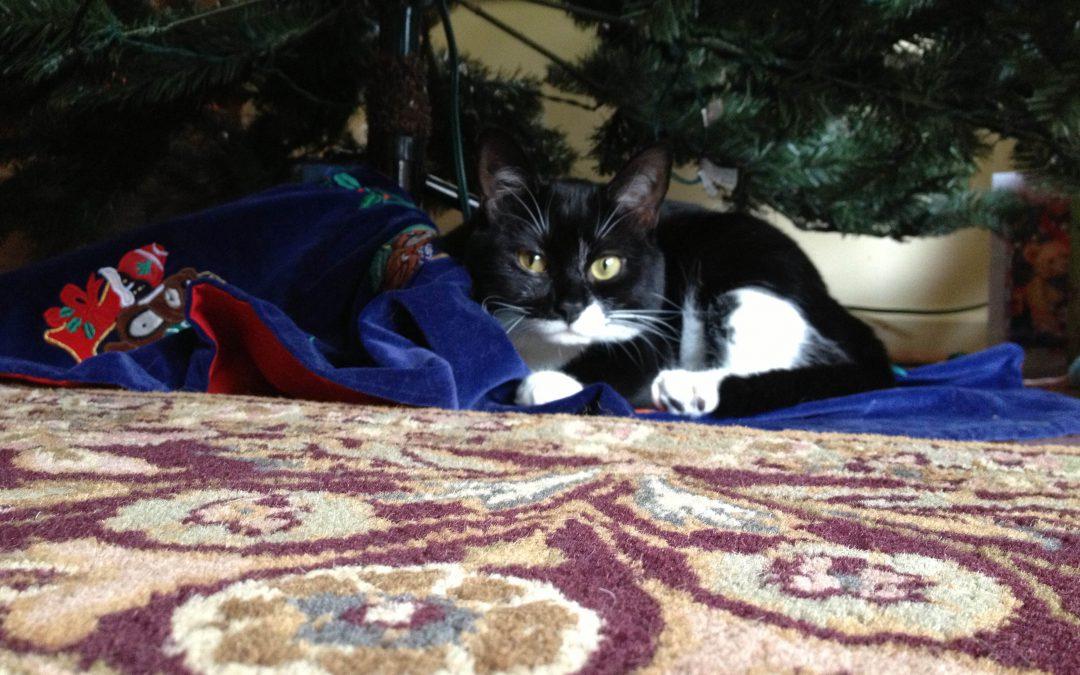 Adopting A Pet This Holiday