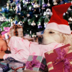 Last Minute Gifts for the Animal Lover