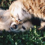 5 Steps to Help Your Pet Lose Weight