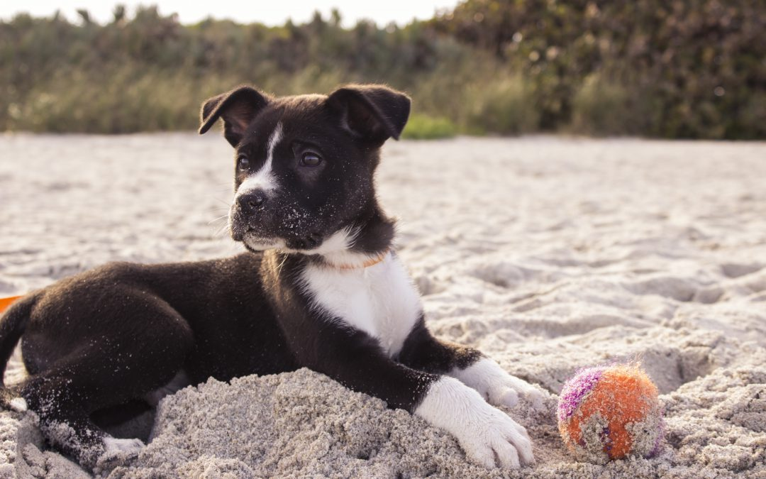 Pet Care: How to Prevent Heat Strokes