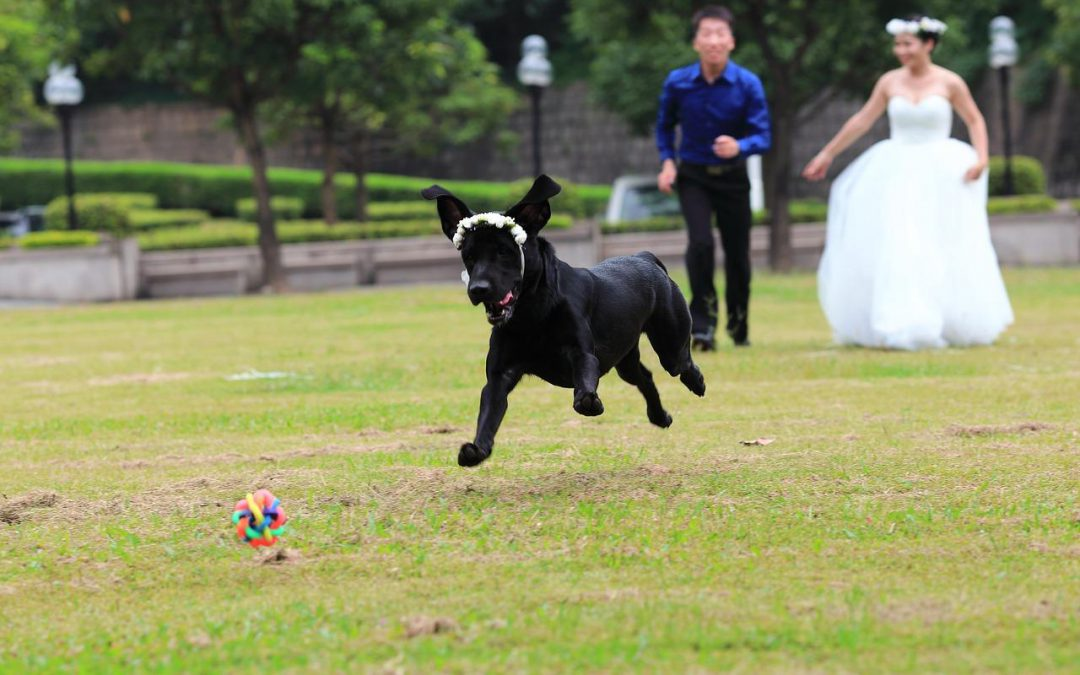 Tips for Including Your Pup in Your Wedding