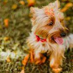 Fall Toxins Poisonous to Dogs and Cats