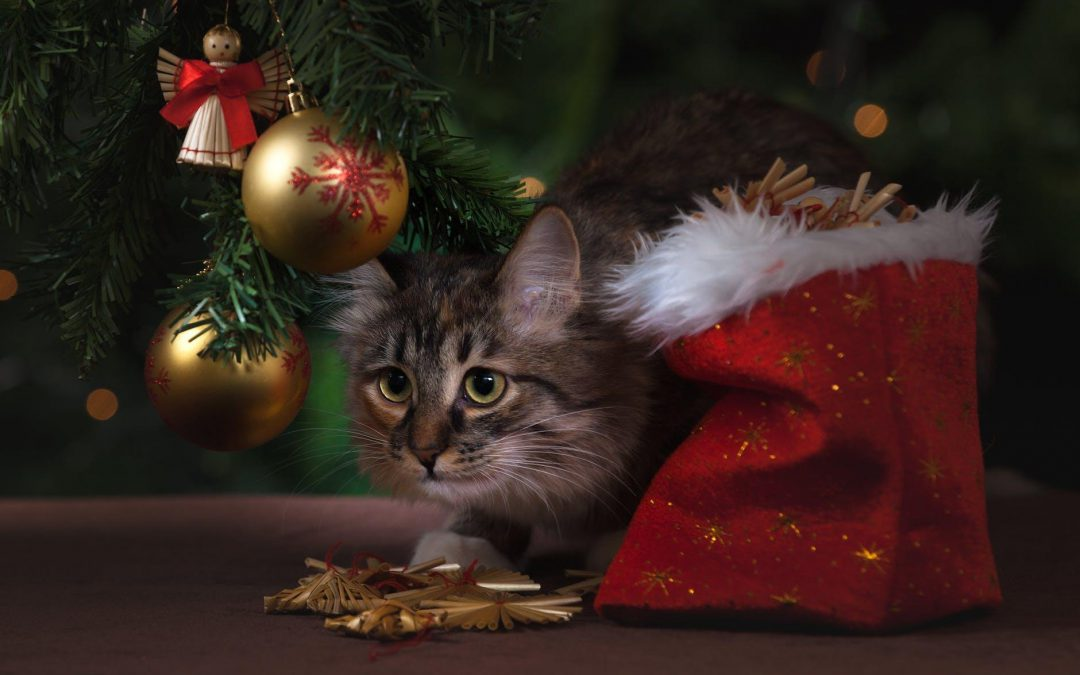 The Perfect Presents for Pets