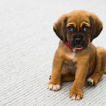 5 Pet Health Problems Fleas Can Cause