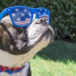 Traveling With Your Pet for Memorial Day