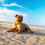 Keeping Your Pets Safe in the Summer Heat