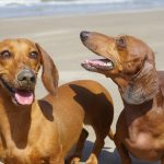 4 Reasons Why Your Dog May Need Sunscreen