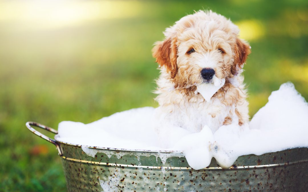 Pet-Friendly Spring Cleaning