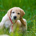 Spring Into Flea and Tick Protection