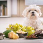 Pet Poison Prevention Guide