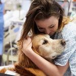 The Training Process of a Therapy Animal
