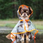 Pet Safety in the Event of a Natural Disaster