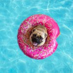 Top Breeds That Suffer From the Heat