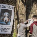 Steps to Follow When Your Pet is Missing