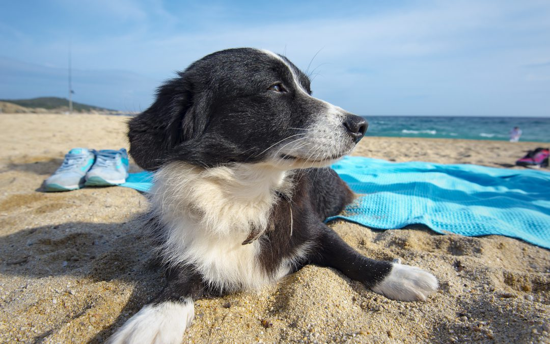 Keeping Pets Safe in the Heat
