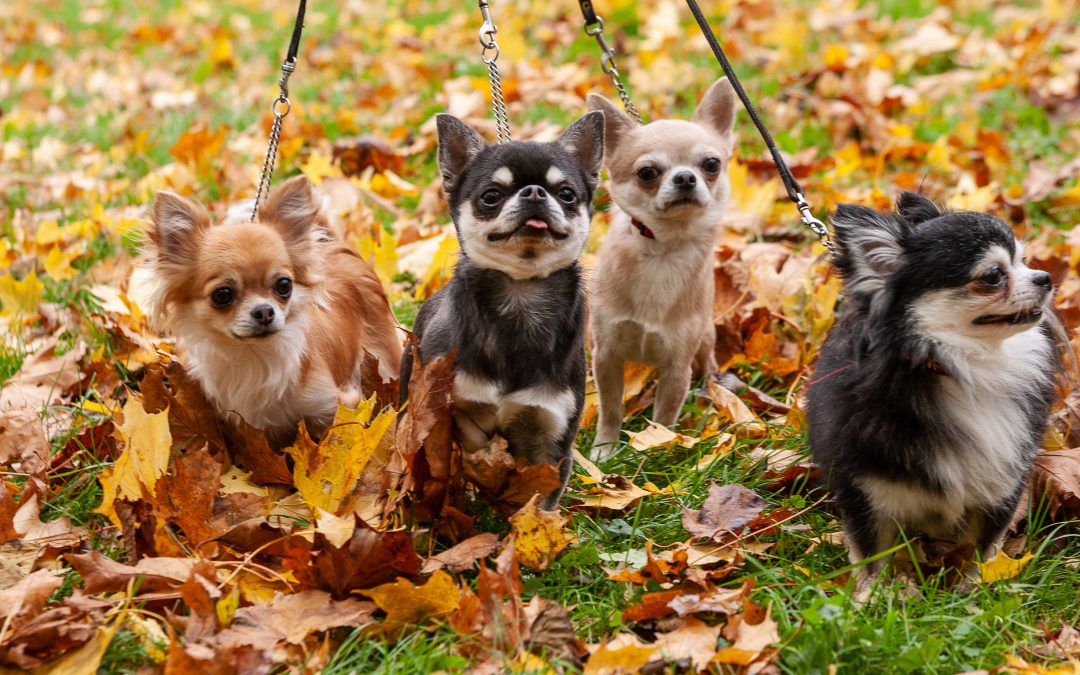 Pet-Friendly Events This Fall