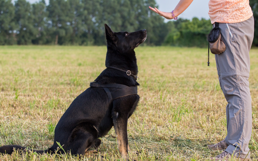 Training Practices for Your Pet