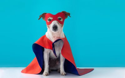 10 of Our Favorite Pet Costumes