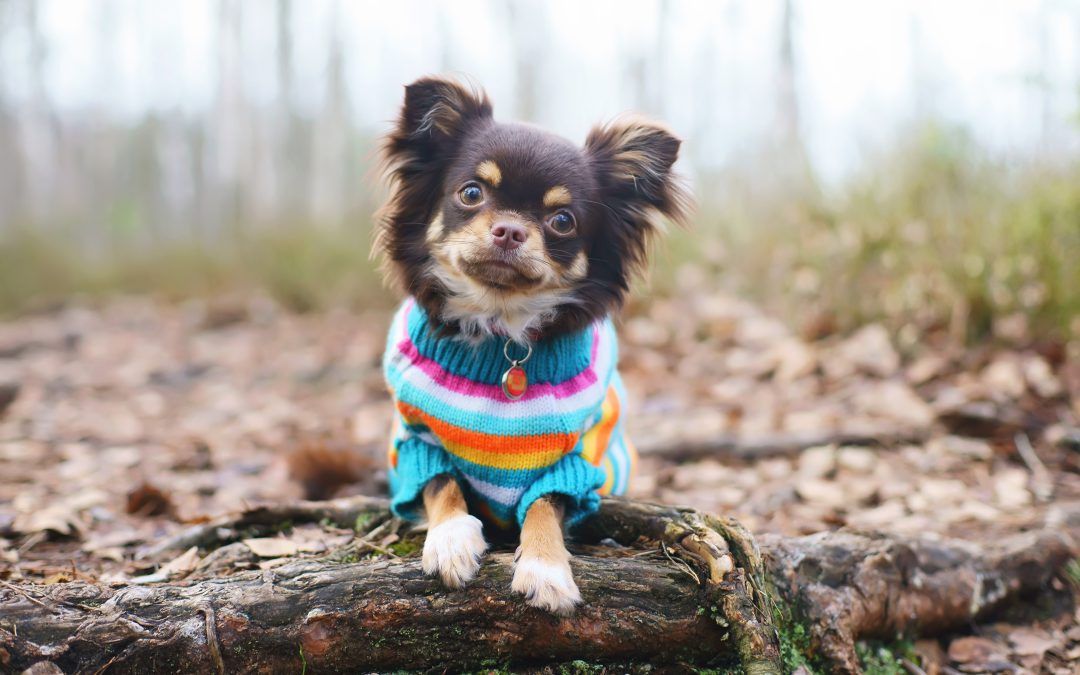 Preparing Pets for Colder Weather