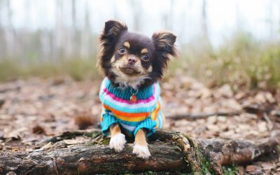 Preparing Pets for Colder Weather