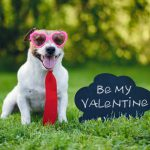 How to Treat Your Pet Like a Valentine