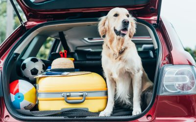 Essentials for Traveling With Your Pet