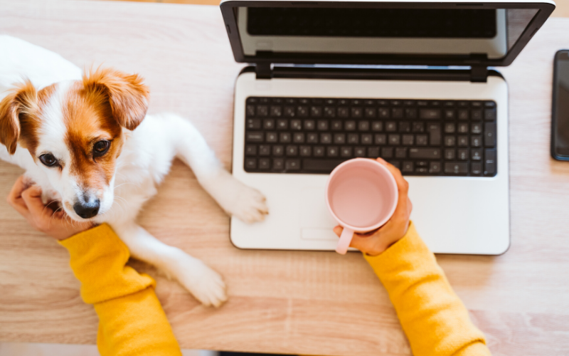 Adjusting Your Pets to Your Work Schedule