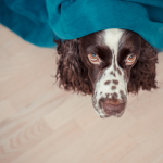 8 Ways to Prepare Your Pets for Fireworks