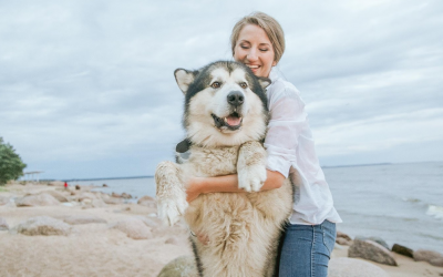 The Healing Power of Pets: Making Humans Happy, Healthy and Hopeful