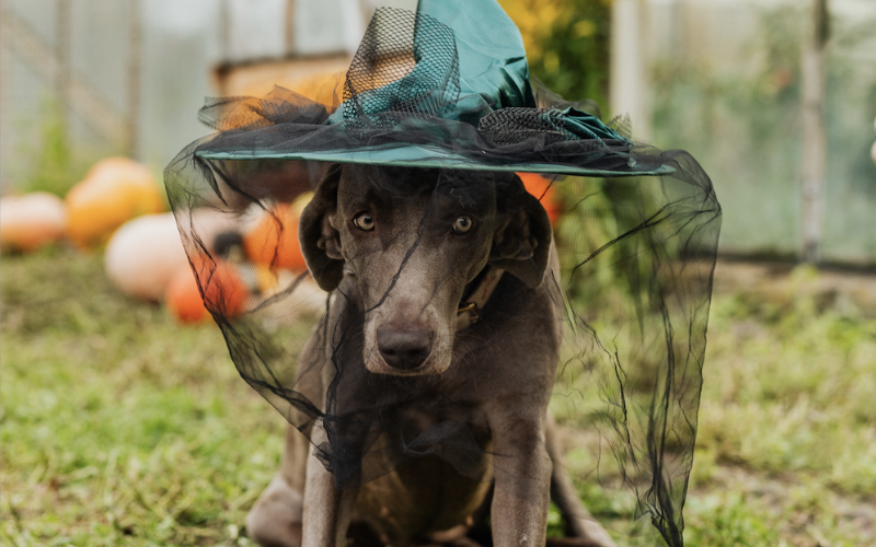 Best 2020 Pet Howl-O-Ween Costumes