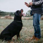 Managing Pet Aggression