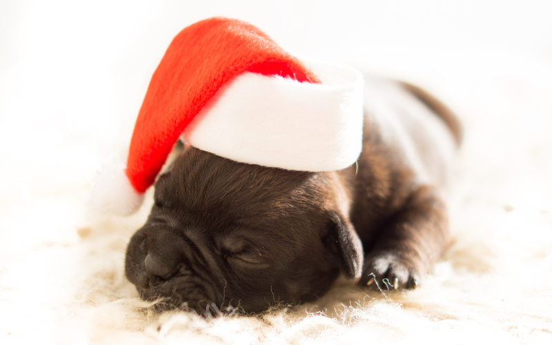 5 Tips for Adopting a New Pet During the Holidays