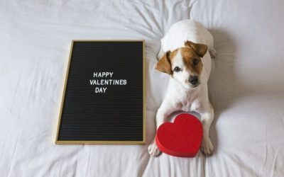 Ways to Spoil Your Pet for Valentine's