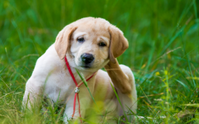 Tips for Getting Rid of Fleas: Spring Cleaning