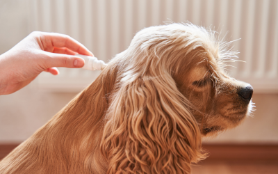 Common Problems Due to Fleas