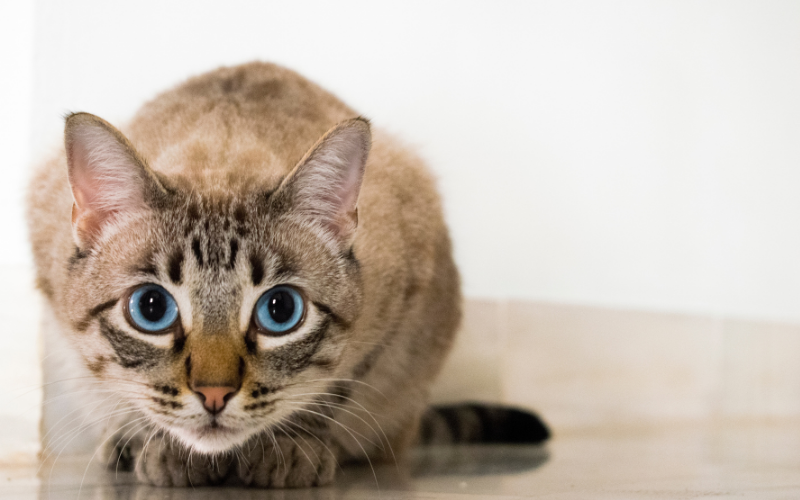 5 Questions to Ask When Choosing a Rescue Cat