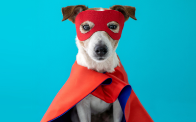 9 Halloween Costume Ideas for Your Pets