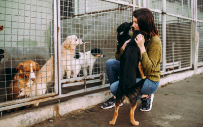 Adopt a Dog Month: Reasons Why Shelter Dogs Are the Best